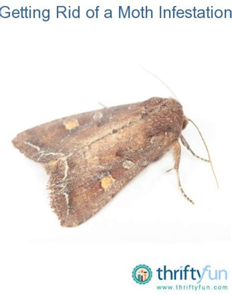How Do I Get Rid Of Pantry Moths by Getting Rid Of A Moth Infestation Thriftyfun