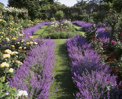 lavender beds lavender flower bed design ideas landscaping gardening ideas