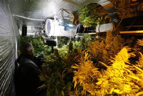 chambre de culture cannabis chambre de culture complete cannabis simple sur le