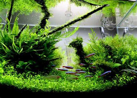 A guide to aquascaping the planted aquarium