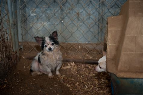 puppy adoption san francisco san francisco spca launches second phase of anti puppy mill caign