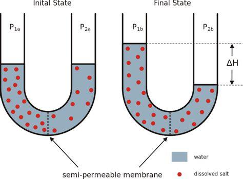 osmosis diagram besslerwheel osmosis diagram