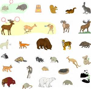 animals that are mammals list search engine at