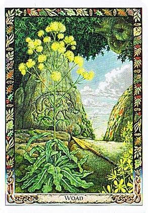 libro the druid plant oracle druid plant oracle woad henna natural dyes