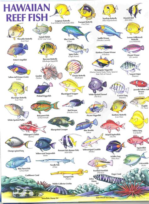 the ultimate guide to hawaiian reef fishes sea turtles fish types names of fish 2017 fish tank maintenance