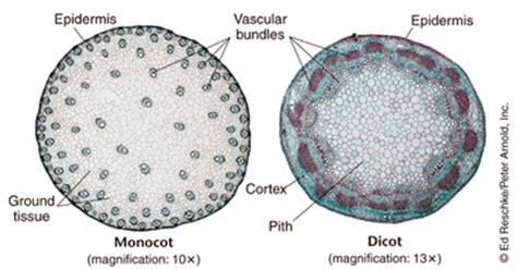 prentice biology