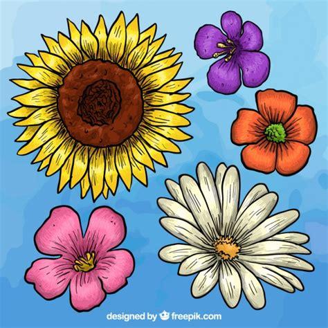 imagenes de flores dibujadas a mano colecci 243 n de flores dibujadas a mano descargar vectores