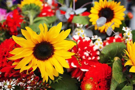 sognare un mazzo di fiori sogni oltre il cancello pagina 4
