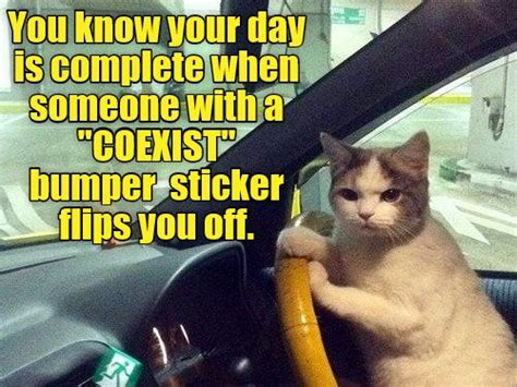 Middle Finger Cat Meme - 17 best images about quot the quot bumper sticker store talking