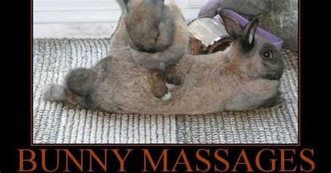 Easter Bunny Meme - massage memes bunny massage superblol massage