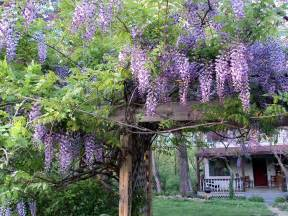 mommy s midwest mountain folk art wisteria and aprons