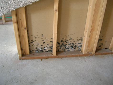 mold in basements mold in the basement all point inspection inc