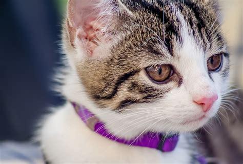 imagenes impresionantes de gatos gatitos tiernos peque 241 os y adorables imagenes