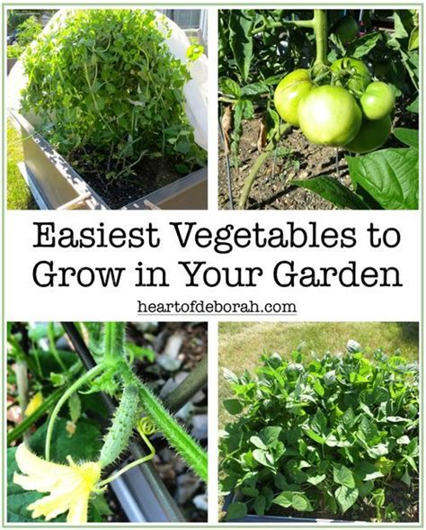 easiest vegetables to grow vegetables to grow and heart