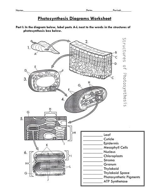 biology diagrams pdf photosynthesis worksheet pdf ค นหาด วย