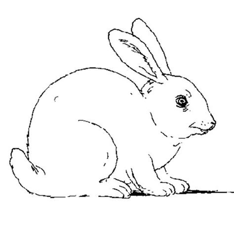 free coloring pages of rabbit rabbit