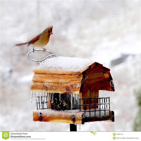 Free Winter Bird Feeder Plans Storage Shed Diy Kits