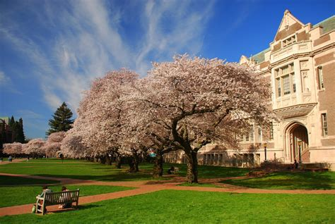 Of Washington Seattle Mba Program by 50 Most Affordable Bachelor S Degrees In Health