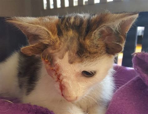 Show Me Your Cat Eye 5 by Rescued Kitten With Four Ears And One Eye Finds A Forever
