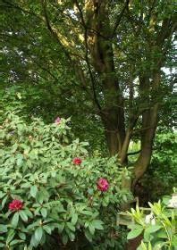 Pilze Im Garten Gut Oder Schlecht by Rhododendron Park Wachwitz 67 Krankheiten Pflanzen Im