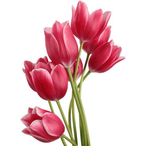 Wallpaper Stiker Motif Yellow Colour Flower Ukuran 45 Cm X 10 M tulip bouquet transparent png stickpng