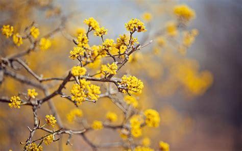 Computer Wallpaper Yellow Flower | yellow flower wallpapers wallpaper cave