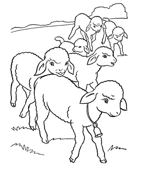 sheep family coloring page sheep with scissors color page