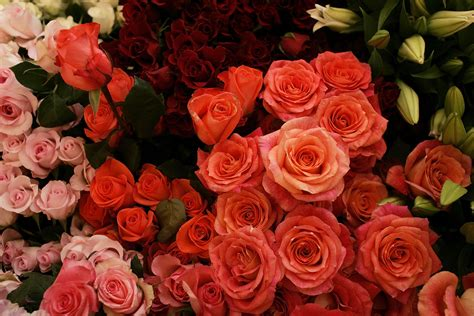 s day flowers where to get valentine s day flowers in los angeles 171 cbs