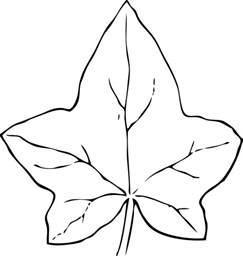 Outline Drawing Of A Leaf by Leaf Outline Clip Black And White Clipart Best