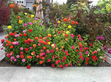 design flower bed flower garden designs to color every season tavernierspa