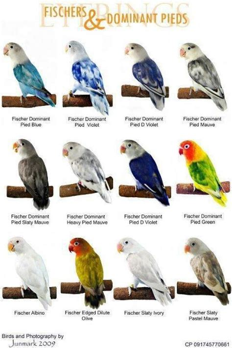 variety of love birds chart paper for kids kidsfunda com
