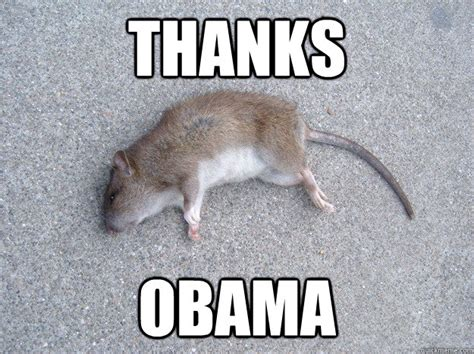 Rat Meme - thanks obama dead rat quickmeme