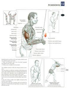 how too delt whtsap msg for everyone triceps dips workouts workout tricep dips and exercises
