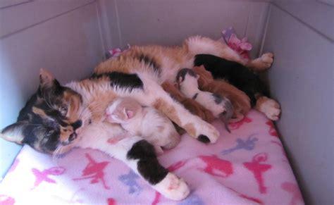 Obat Cacing Pada Anjing penyebab muntah cacing pada kucing dan anjing