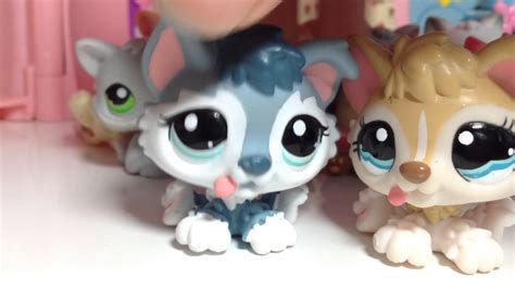 lps kittens and puppies lps all of my kittens and puppies lps collection funnycat tv