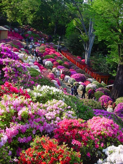 What A Beautiful Hillside I Can Only Imagine The Aroma Japanese Flower Gardens
