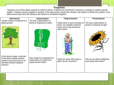 Plants And The Environment plant and animal responses to the environment
