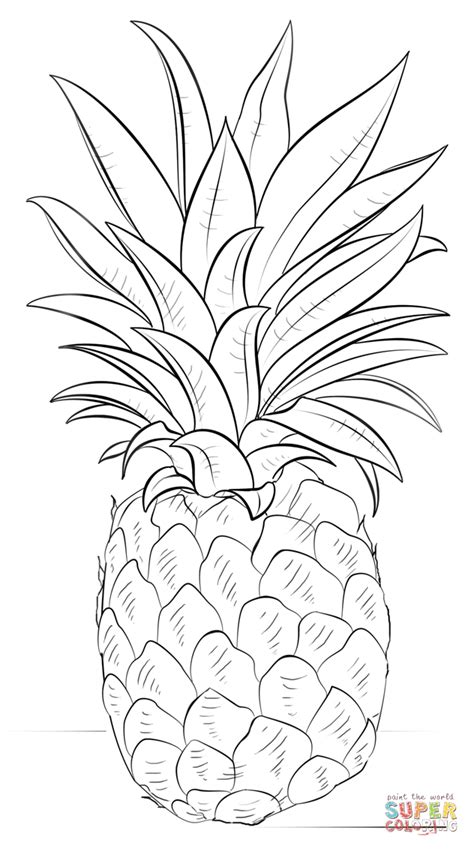 pineapple coloring page pineapple coloring page free printable coloring pages