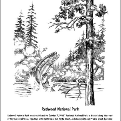 coloring page of redwood tree redwood tree coloring pages
