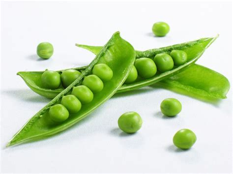 are peas for dogs can dogs eat peas sweet treat or dangerous vegetable