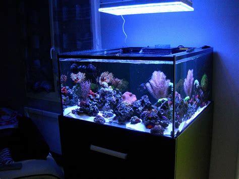light for 30 gallon aquarium 30 gallon marine aquarium aquarium design ideas
