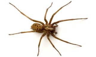Spider Used Read My Description Below Who Else Is This Scared Of