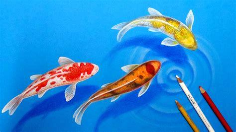 koi fish drawing color koi pencil colour pencil and in