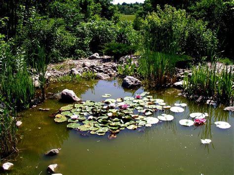 backyard pond maintenance 25 best ideas about pond maintenance on pinterest koi