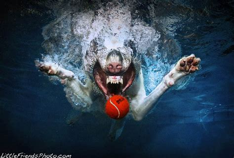 dogs catching ball  water  seth casteel