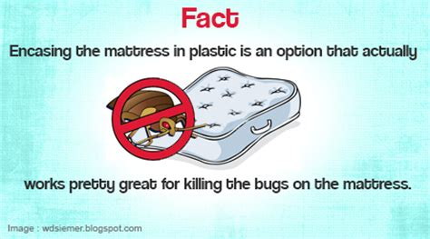 how can i kill bed bugs bed bug removal denver is there a natural way to kill bed