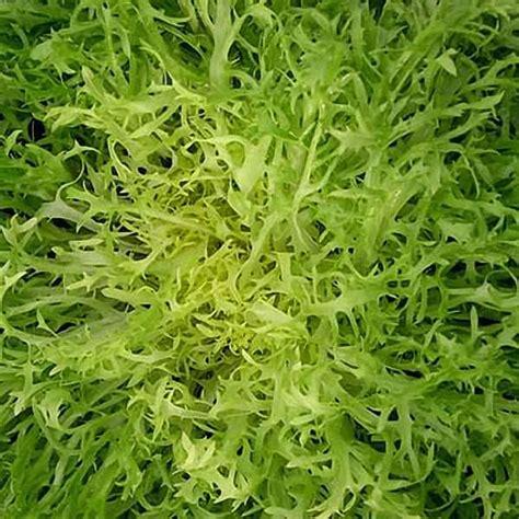 vegetable seeds for sale greens seeds for sale 6 varieties vegetable seeds