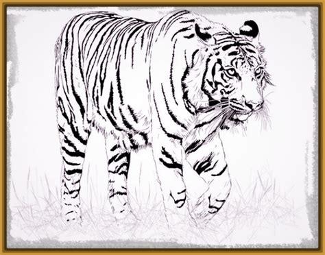 dibujos realistas para colorear imagenes del tigre de bengala para colorear archivos