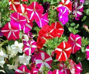 puzzle fiori puzzle di fiori e rompicapi
