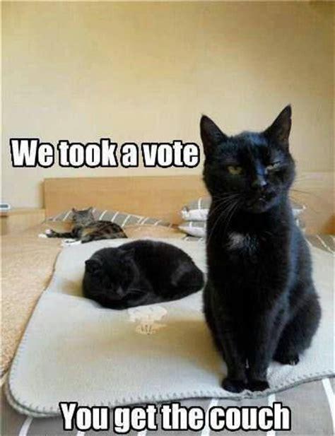 Funny Black Cat Memes - 1000 images about black cats on pinterest pedestal cat